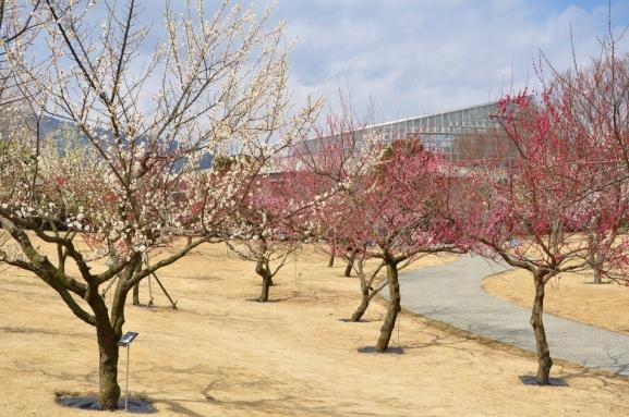 小田原フラワーガーデン2020年渓流の梅園