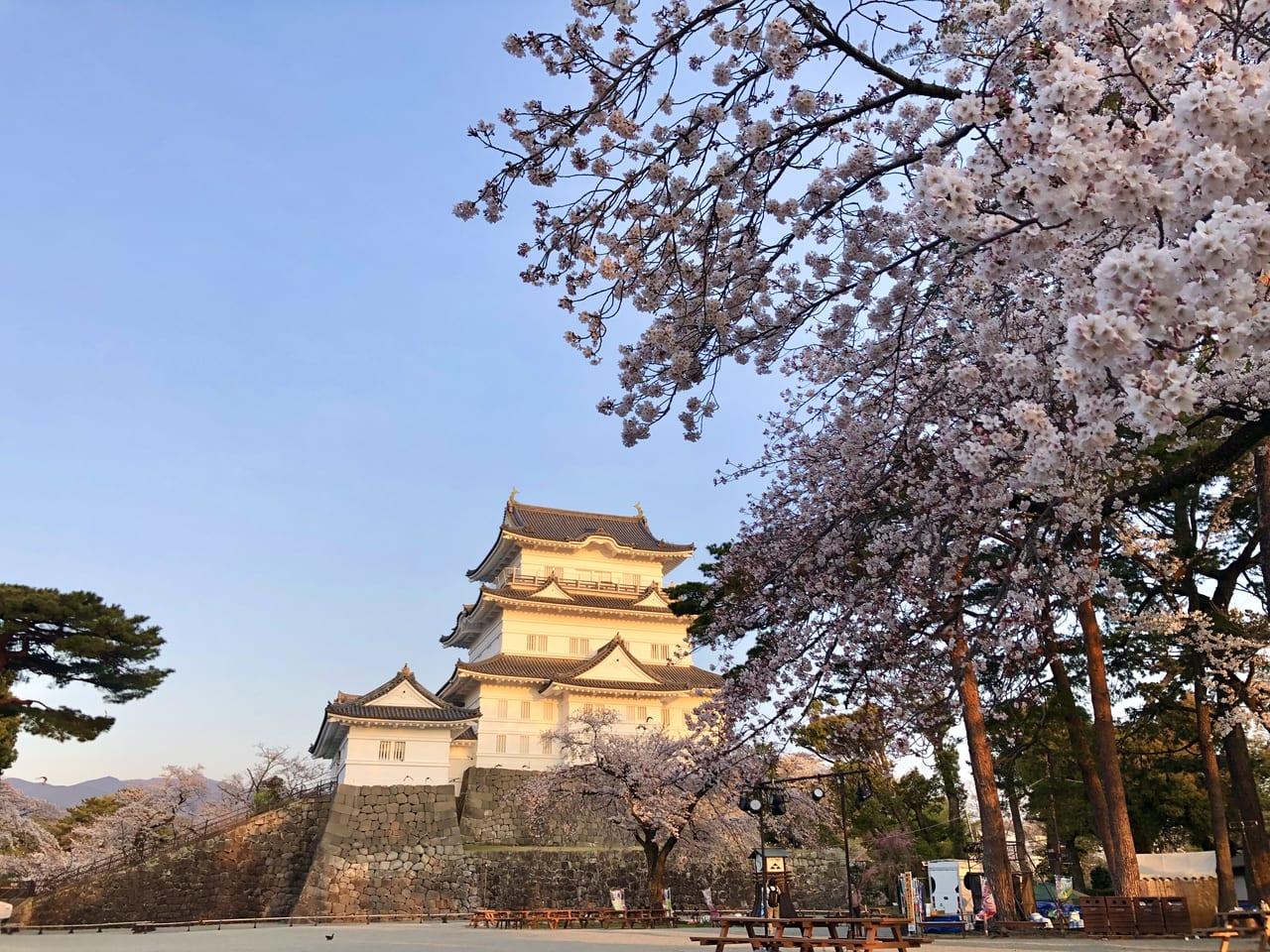 観光 小田原 小田原城に観光に行ってきた